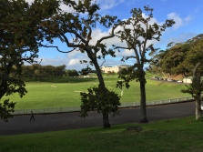 Sports fields in Auckland Domain