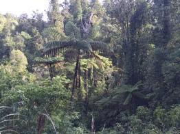 Some nice NZ foliage