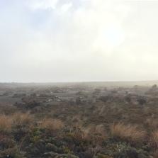 Aforementioned fog