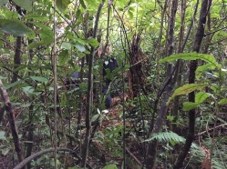 """Bushbashing through the woods. And I'm told this was """"easy"""" stuff"""