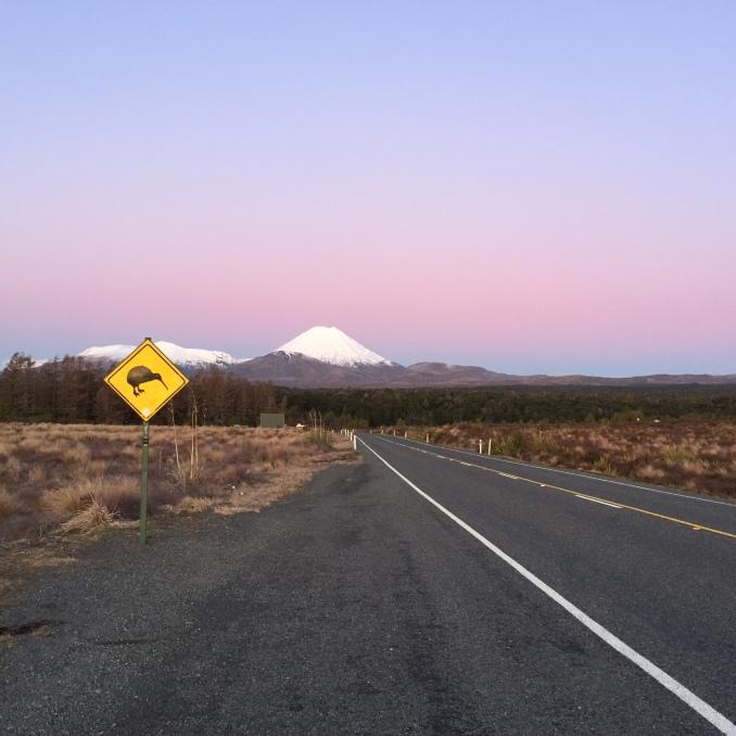 Kiwi crossing!