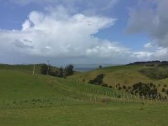Lots of farmland, fences, sheep.