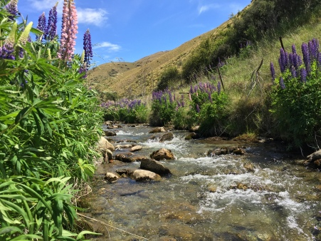 Wildflowers strewn across a babbling brook. Finally!
