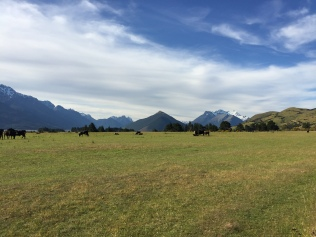 Cows and mountains, that's New Zealand.