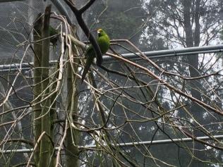 Bird conservatory! Parakeets!