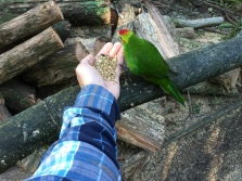 Got to feed birds at the sanctuary I sometimes stop at on my drive down :)