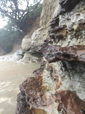 Alternating rock layers at Hatfield's Beach on the coast north of Auckland