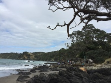 Overseeing undergraduate students doing a mapping project at Matheson Bay (north of Auckland)