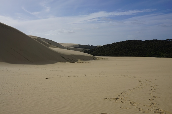 Reminds me a lot of White Sands, New Mexico. And amazing how the dunes come right up against the green forest!