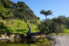 Isn't it an intriguing tree?